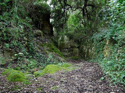 Barranc d'Algender, a valuable ecosystem and a spectacular landscape
