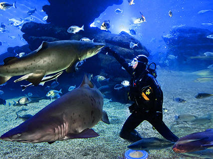 Palma Aquarium In Mallorca Spain With Ratings Reviews Baleares Mallorca Travel Guides