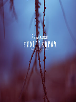 Rawccoon Photography