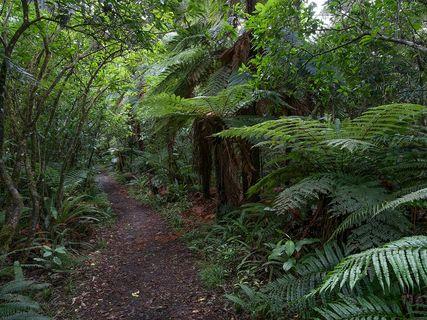 Mangawhero Forest Walk