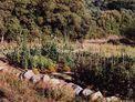 Les jardins traditionnels du Cap Corse