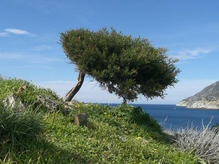 Nature and the Cap Corse