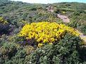 Flora del Cap Corse