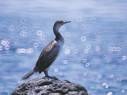 The Cap Corse fauna