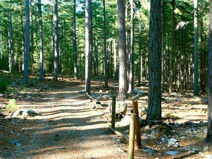 Forest Vizzavone
