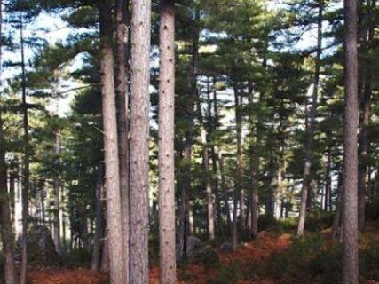 Rospa Sorba forest