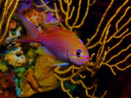 """Aquarium of the """"poudrière"""""""
