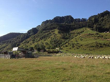 Whakahoro DOC Campsite