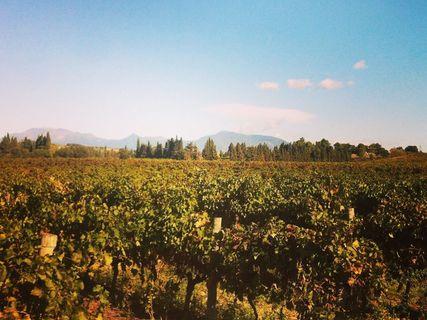 Visit & wine tasting of the Clos Canereccia