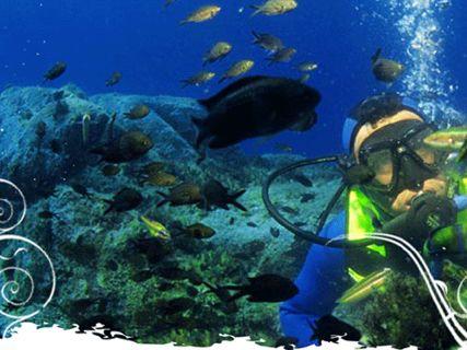 Randonnée palmée (snorkeling)
