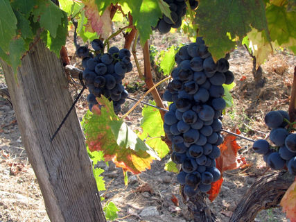 Wines of the Domaine Clos Teddi