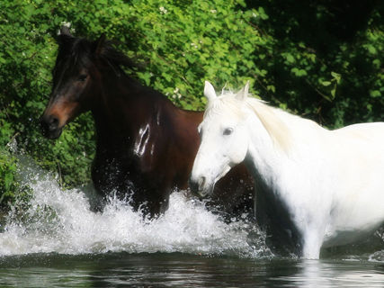 River and mountain horse ride (1h)