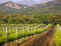 Visite & dégustation des vins du Clos Capitoro