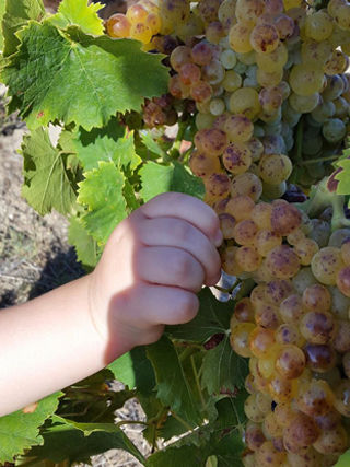Wines of Domaine Casabianca