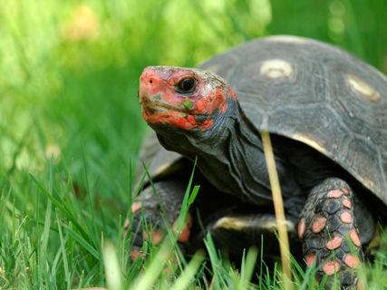 A Cupulatta Park, home of turtles