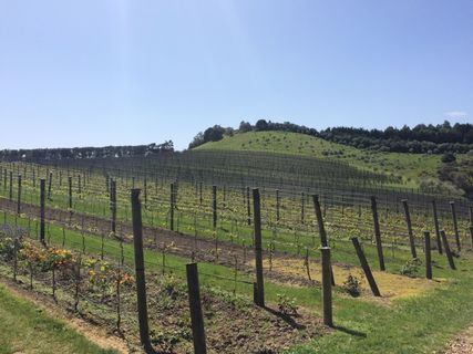 Te Motu Vineyards