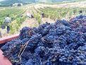 Dégustation des vins de MlleD Maria Francesca Devichi Vigneronne