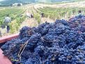 Wine tasting MlleD Maria Francesca Devichi