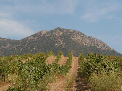 Dégustation des vins du Domaine de Granajolo