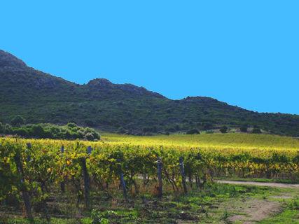 Dégustation des vins du Domaine Giacometti