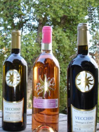 Tour and wine tasting of the Domaine Vecchio