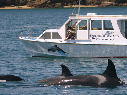 Dolphin Watch Ecotours