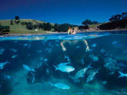 Goat Island Dive