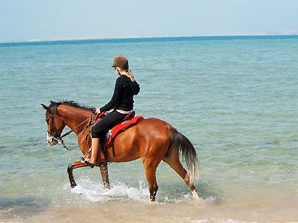 Pakiri Beach Horse Riding
