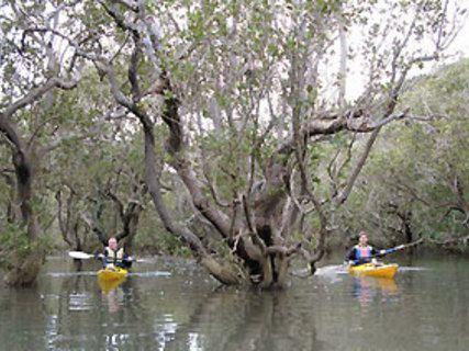 Northern Bays Kayaking