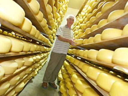 Mahoe Cheese Factory