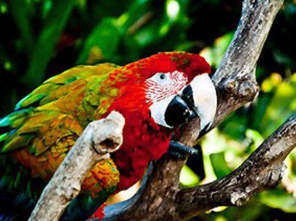 Parrot Place