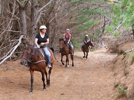 Fern River Horse Trekking