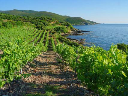 Domaine Pieretti wines