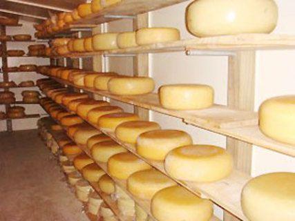 Matatoki Farm Cheese