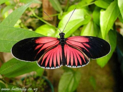 Tropical Butterfly & Orchid Garden