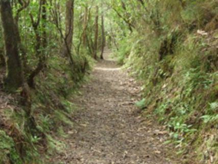 Golden Hills Battery Track