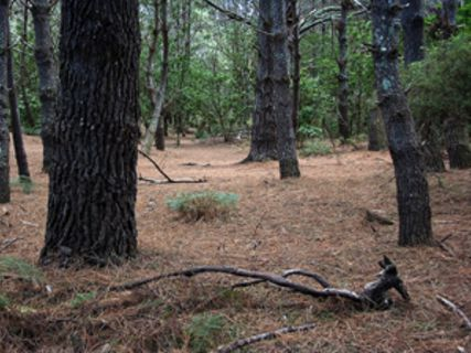Tairua Forest