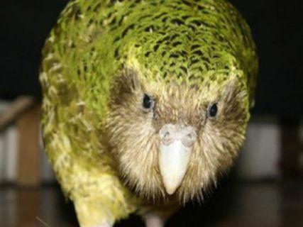 Réserve ornithologique de Maungatautari