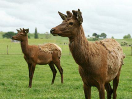 Oraka Deer Park