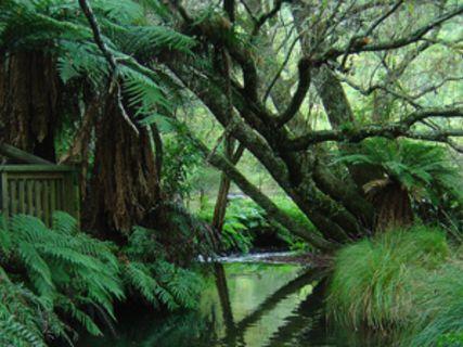 Wairoa Stream - Lindemann Track