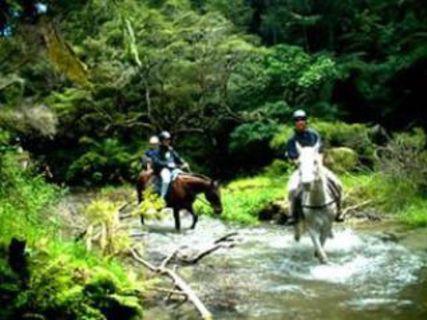 Tui Glenn Farm Horse Treks
