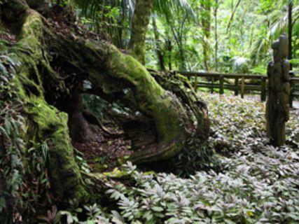 Taketakerau