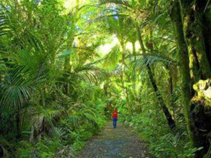 Morere Springs Scenic Reserve