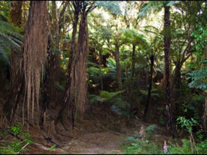 Mahia Peninsula Scenic Reserve