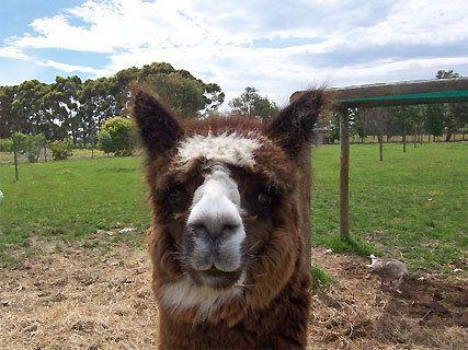 Haumoana Farmyard Zoo