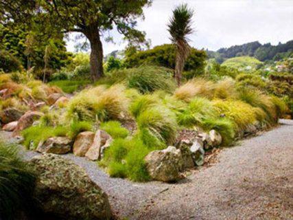Otari-Wilton's Bush