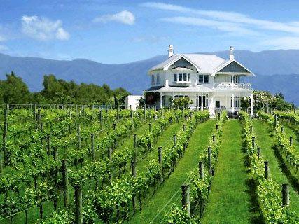 Vynfields vineyard