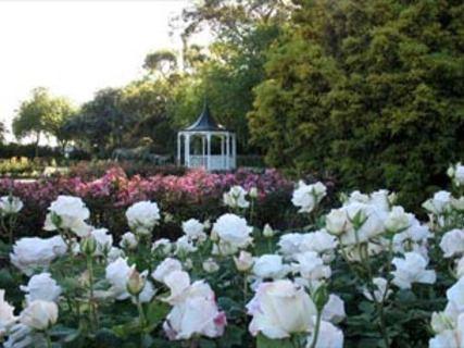 Dugald McKenzie Rose Garden