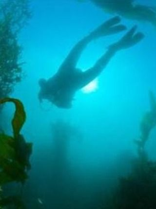 Dive Picton