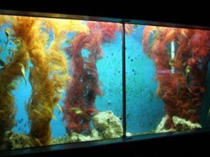 Eco World Aquarium & Terrarium